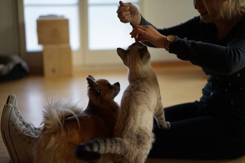 Animal lovers Food Cat Chiuaua Pets Real People Domestic Animals Togetherness Indoors  Mammal Dog Sitting Domestic Cat Home Interior Women Day Adult People