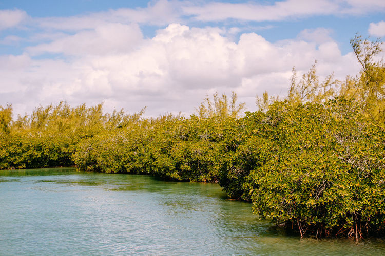 Mangrove Forest Sunlight Beauty In Nature Cloud - Sky Day Green Color Growth Idyllic Landscape Mangrove Mangroveplant Mangroves Nature No People Non-urban Scene Outdoors Plant Scenics - Nature Sea Sky Tranquil Scene Tranquility Tree Water Waterfront