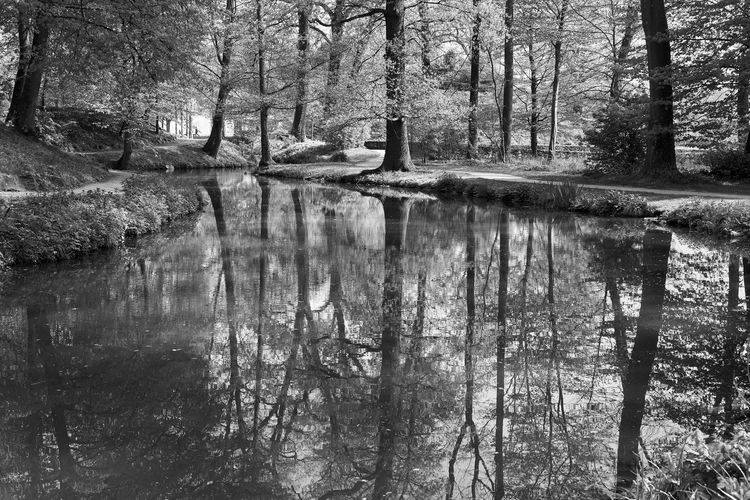 reflections part 3 Monochrome Lucky's Monochrome Black And White Blackandwhite Photography Lake Water Reflection Relections Backgrounds Monoart Fine Art Photography EyeEm Gallery Exceptional Photographs Light And Shadow Mood Lucky's Mood Art Is Everywhere Beauty In Nature Nature Landscape Contrast Tranquility Tree Sunlight The Great Outdoors - 2017 EyeEm Awards