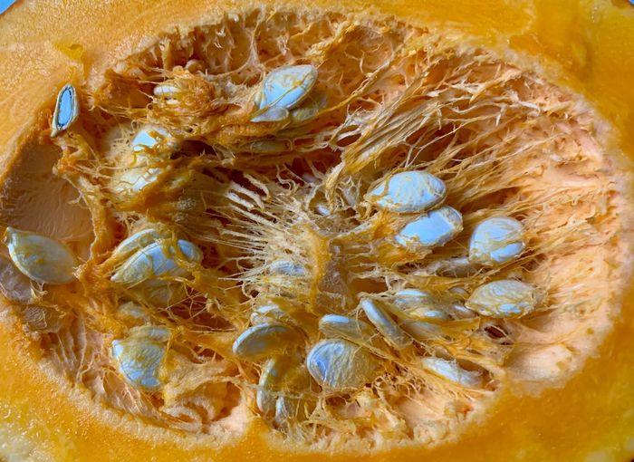 Pumpkin Seeds Pumpkin Close-up No People Biology Invertebrate Science Animal Indoors  Microbiology Full Frame Backgrounds High Angle View Anatomy Extreme Close-up Healthcare And Medicine Nature Animal Themes Insect Pattern Healthy Eating