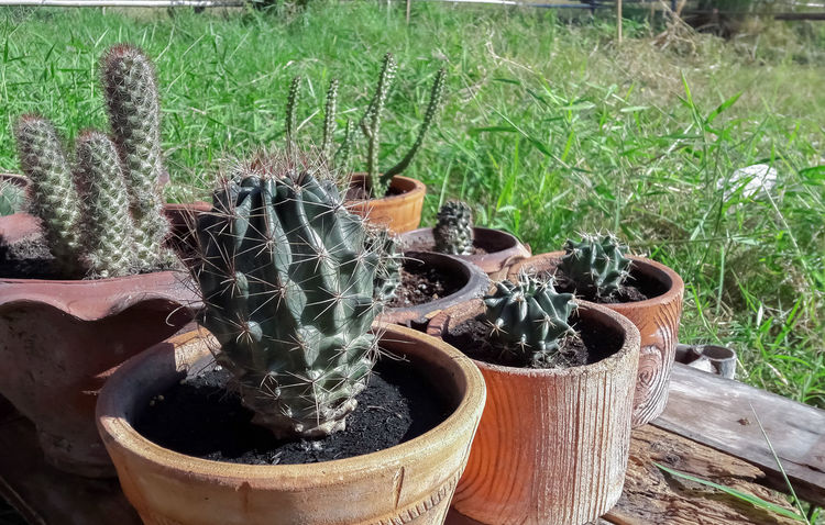 Cacti Cactus Cactus Flower Cactus Flowers Cactus Garden Cactus Needles Cactus Plant Cactus Thorns Cactus Tree Cactuses Cactuslover Cactusplants Day Garden Garden Flowers Garden Photography Gardens Natur Natural Beauty Nature Nature Photography Naturelovers No People Plant