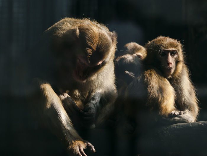 monkey family Animal Family Animal Themes Animal Wildlife Animals In The Wild Cage Close-up Day Mammal Monkey Nature No People Outdoors Representing Sunlight Young Animal