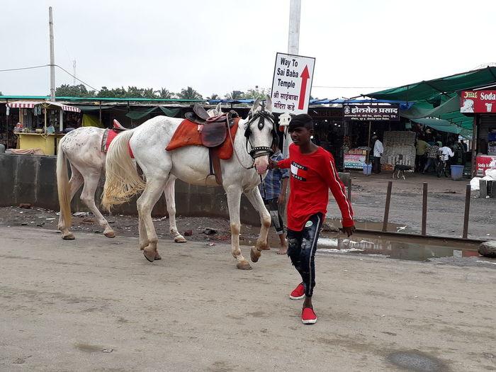 Horses on city street