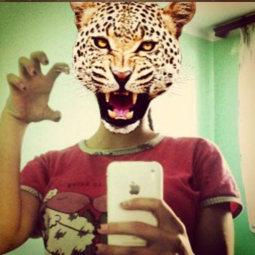 Animalface Easytigerapps RAAW Mjau macmac ?☝?❤