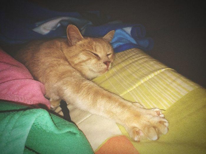 My cat. The best company, love u Blonddy