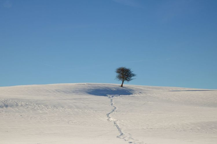 Lonely tree in the winter wonderland The Week on EyeEm Lonely Tree EyeEm Best Shots - Landscape EyeEm Best Shots My Best Photo EyeEm Nature Lover Landscape Photography Natur Lover Winter Winter Wonderland Sky Land Landscape Tranquil Scene Tranquility Scenics - Nature Desert Beauty In Nature Nature Blue Environment Tree Clear Sky Plant Non-urban Scene Day The Minimalist - 2019 EyeEm Awards