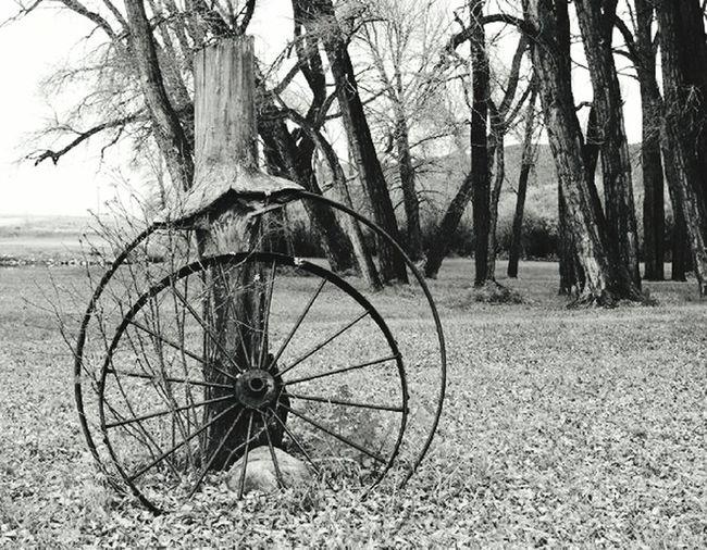 Wagonwheel Timepass Historic Wagon Wheel Wagonwheels Historical History Through The Lens  History Time Passes By Time Passes Abandoned Abandoned Wagons Wheels Of Time Historical Site Time Passed Time To Reflect Passage Of Time Passage Of Time