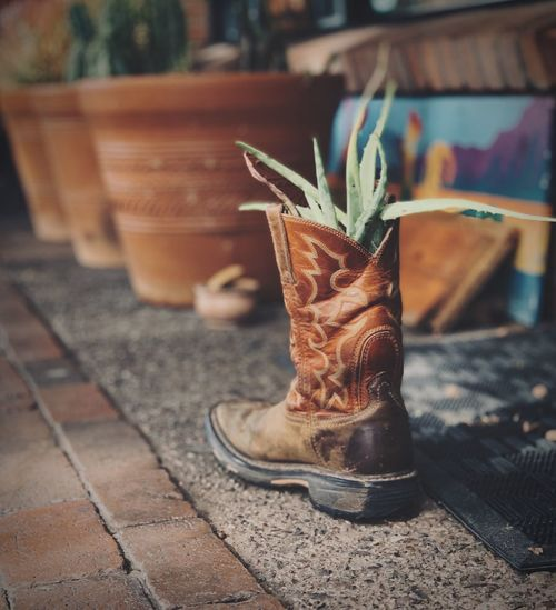 Close-up of potted plant on footpath