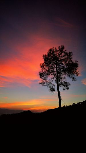 Greet The Sun EyeEm Best Shots Leica Photography. Beauty In Nature Beautiful Sunset Great Morning Idyllic Sunrise Pictorialism Solitary Tree Beauty At Sunrise Tree Silhouette Ethereal Dramatic Sky Orange Color Idyllic Sky Single Tree Romantic Sky Moody Sky Atmospheric Mood Cloudscape