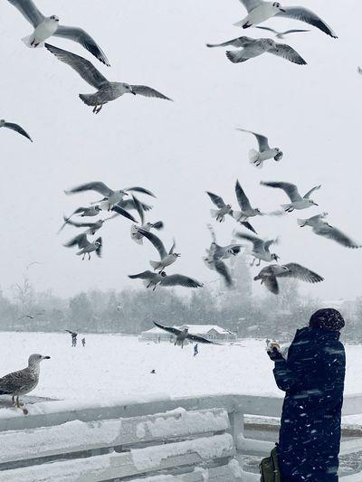Flock of birds flying over snow covered landscape