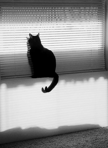 """Shadow Cat"" Blinds Shadows & Lights Shadow Cats Of EyeEm Cats Domestic Cat One Animal Pets Feline Animal Themes Domestic Animals Cat Indoors"