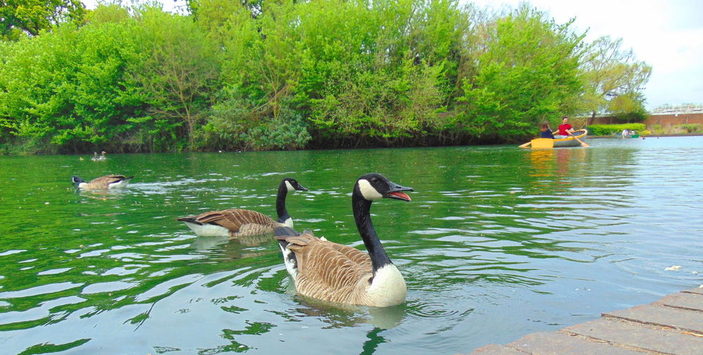 WENT PARK WITH MY LITTLE ONES AND TOOK SOME PICS IN FINSBURYPARK LAKE NORTH LONDON #ducks
