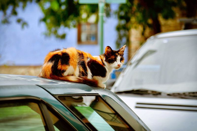 Close-up of cat on car