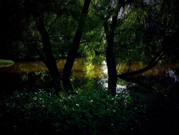 Tree Plant Land Nature Beauty In Nature Tranquility Forest Growth No People Water Scenics - Nature Outdoors Lake Day Green Color Tranquil Scene Environment Trunk Tree Trunk