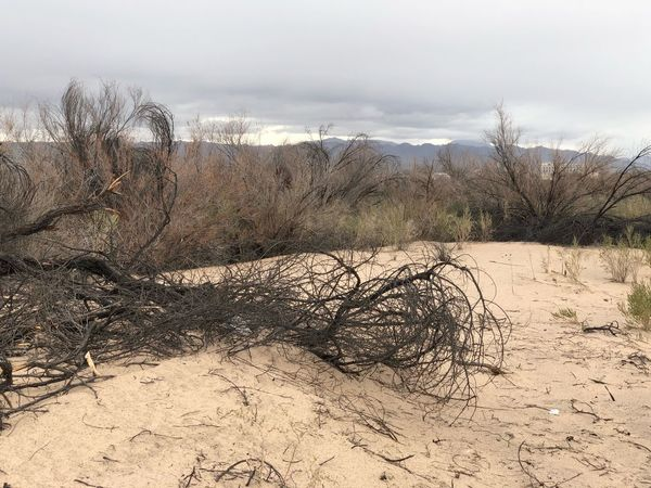 Sand Nature Beach Day Bare Tree Tranquility Tranquil Scene Landscape No People Beauty In Nature Scenics Arid Climate Sand Dune Dead Tree