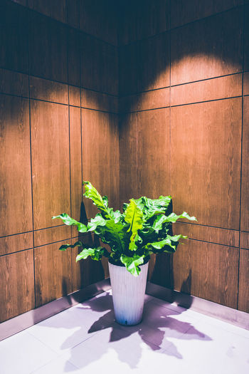 Day Freshness Green Color Growth Indoors  Nature No People Plant Light And Shadow Flowerpot Co2 Oxygen