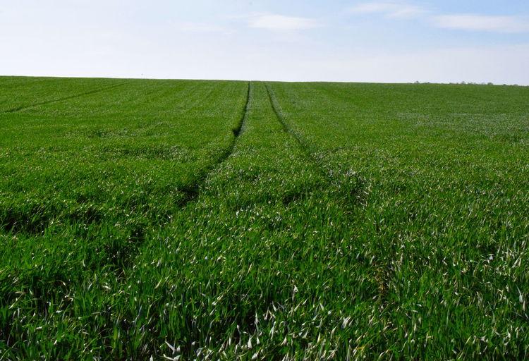 Grass as far as
