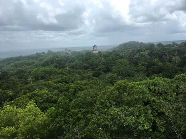 A Bird's Eye View Tikal Guatemala Mayan Ruins Rainforest View View From Above Miles Away
