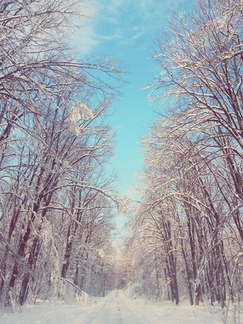 White Winter Wonderland Winterscapes Forestwalk Forest Photography Narnia  Winter Sky Snowy Trees Winter Sunshine Romanian Forest Romanian Lands Roads Of Romania