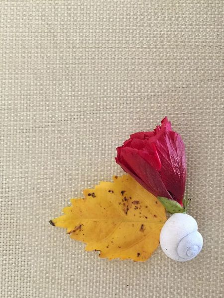 Florida winter still life Shell Seashell Yellow Leaf Red Flower Hibiscus Flower Hibiscus Still Life