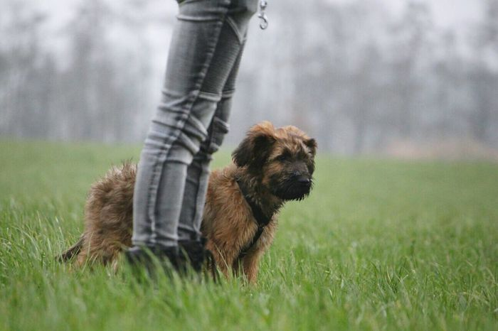 RUMPEL One Animal Pets Grass Outdoors Dog Nature Animal Themes One Person Day People Mammal Grass Babydog Sky Welpe Briar Walking Nature Legs