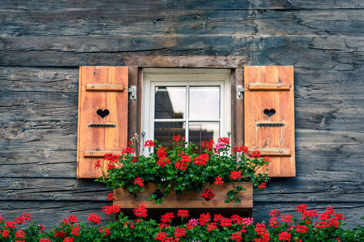Flowers on window of house