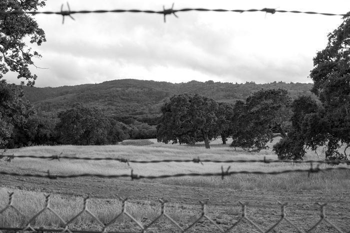 B B/w Barbed Wire Beauty In Nature Hill Landscape Landscape_Collection Nature Non Urban Scene Oahu Tranquil Scene Tree WoodLand Woods