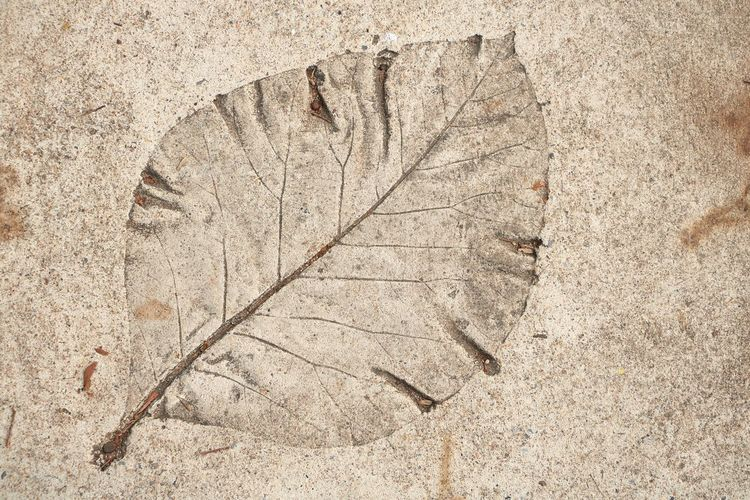 Leaf print on cement floor : Cement Floor Wall - Building Feature Nature No People Pattern Textured  Close-up Outdoors Backgrounds Day Art Plant Part Leaf Directly Above History Ancient The Past Leaf Vein Architecture Fossil Rough Plant