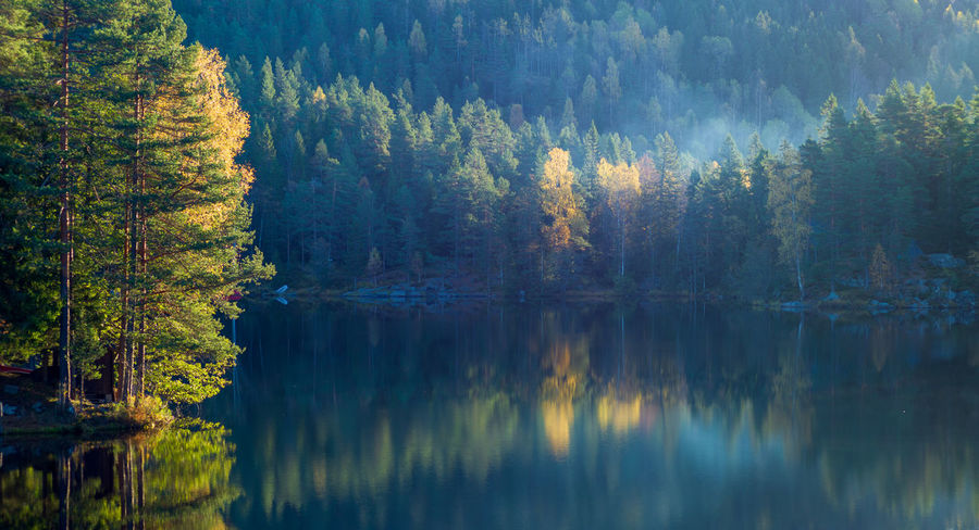 Morning sun over a forest lake. EyeEmNewHere Reflection Tree Water Lake Plant Scenics - Nature Tranquility Beauty In Nature Forest Tranquil Scene Autumn Nature No People Day Non-urban Scene Outdoors Reflection Lake Morning Morning Light Autumn colors Mist Autumn Mood