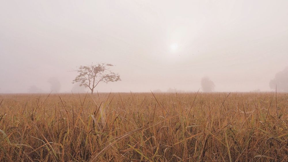EyeEm Selects Field Land Plant Sky Landscape Growth Environment Tranquil Scene Scenics - Nature Nature Beauty In Nature No People Tranquility Agriculture Crop  Rural Scene Fog Day Tree Outdoors