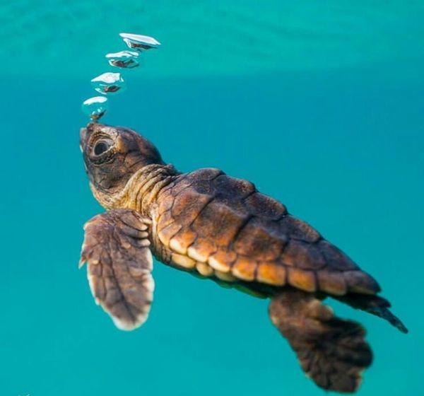 Animal Wildlife Reptile Turtle Underwater Animal Animal Body Part One Animal