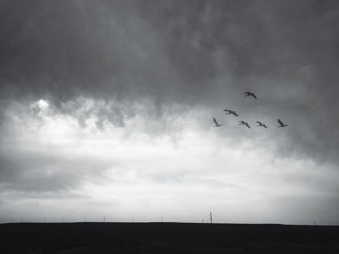 Flying Bird Nature Traveling Hello World Sky Black And White Black & White EyeEm Art