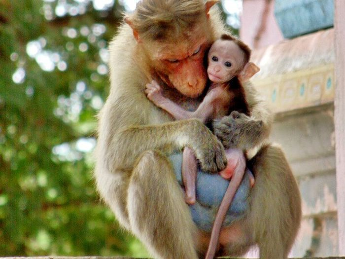 This is an adorable love....( Mother's love towards their kid) The best love in the world!!!! If u ppl miss ur mother just a word too her ( I love u mom - gives a lots of happiness in their entire life) just try it!🙌😄😂😂😂My First Pic On EyeEm Close-up Taking Time To See The Little Things Taking Photos. Animals Love Monkey Face Monkey Family Wildlife & Nature Wildlife Photography Wildlife_perfection Love ♥ Family Time Femalephotographerofthemonth Wild & Pure Pure Heart Lovely Hug Hugging