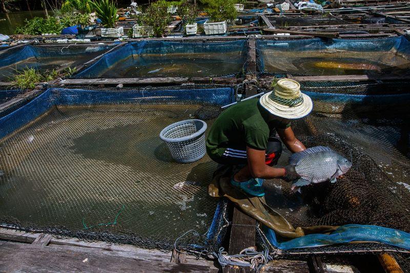 Fisherman with fish in farm