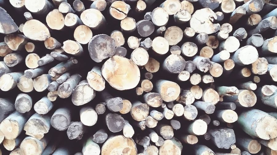 Wood - Material Lumber Industry In The Forest Woods Lumbermill