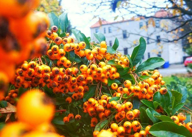 Autumn around town Taking Photos Hanging Out Enjoying Life Urbanexploration Autumn🍁🍁🍁 The Colors Of Autmn Taking Pictures