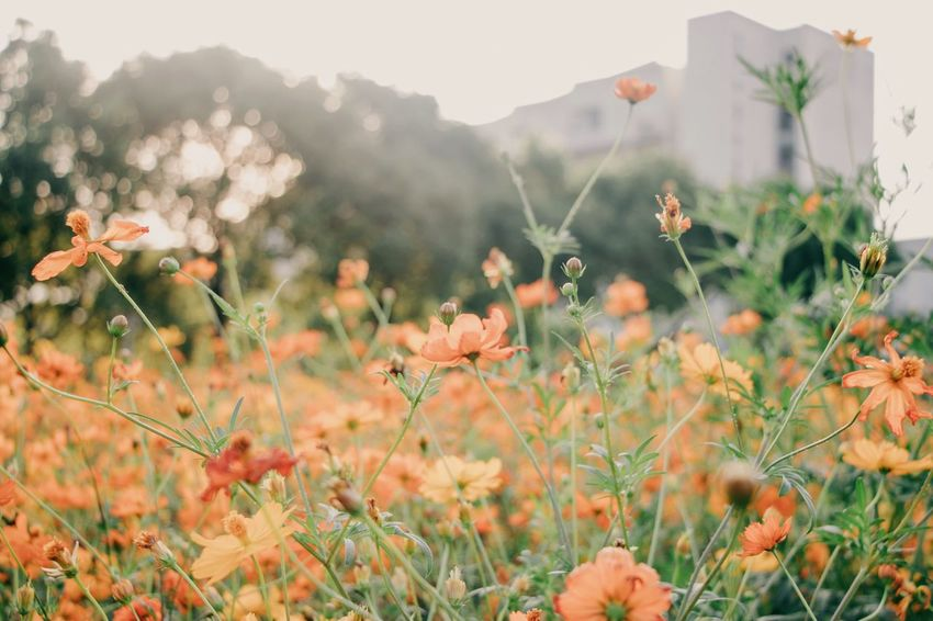 Nature Flower Plant Growth Mountain Day Outdoors No People Beauty In Nature Grass Architecture Building Exterior Freshness Sky Flower Head Close-up