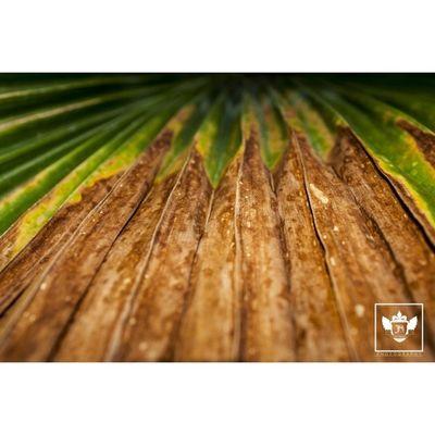 Palm Nature Jiniuskonxeptsphotography Photography