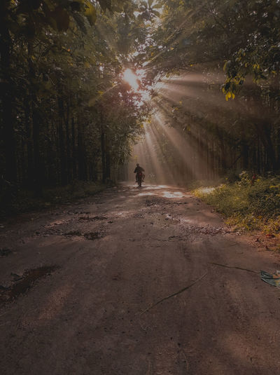 Man walking on road amidst trees in forest