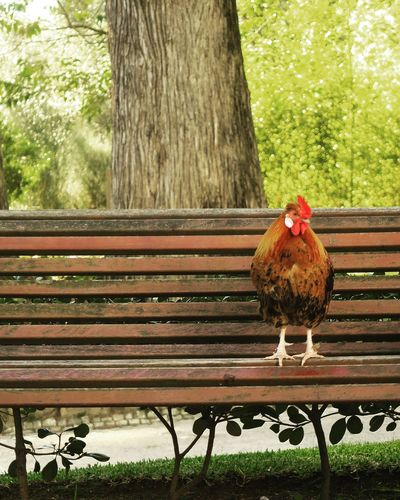 Bird on bench against tree trunk