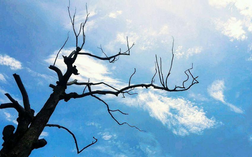 Death tree on