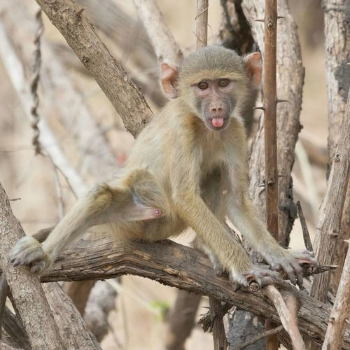Wildlife Wildlife Photography Monkey So Cute Nature's Diversities