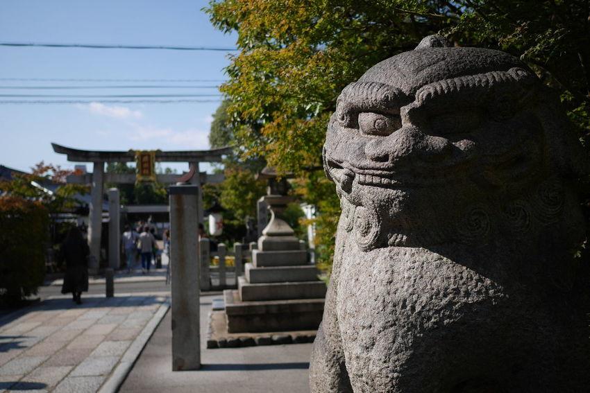 Komainu Kyoto, Japan Seimei Shrine