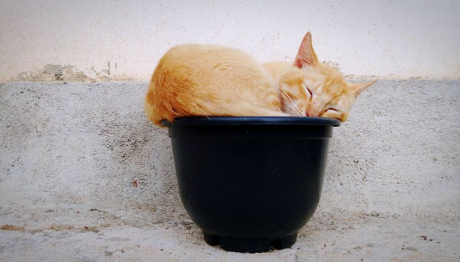 Close-up of cat sleeping on plant pot