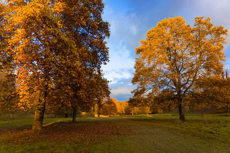 Autumn landscape of yellow leaves trees in a park in cloudy blue sky day Tree Plant Autumn Change Beauty In Nature Sky Land Growth Nature Tranquility Orange Color Landscape Environment Scenics - Nature Tranquil Scene Field Grass Park No People Day Outdoors Fall Autumn Collection