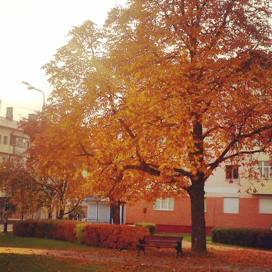 Любимая скамейка спрятаться на виду у всех Золотая осень прогулка