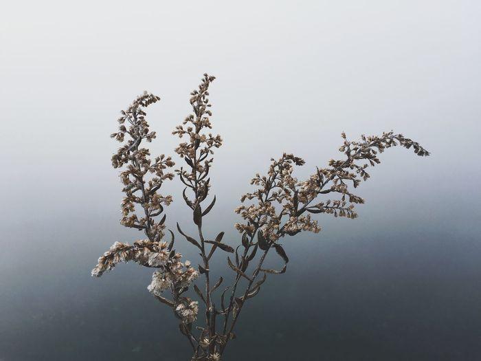 Flower Fog Grey