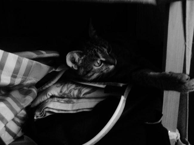 My cute kitty. Miaou Cat Kitty Kitten 🐱 Penny Blackandwhite Blackandwhite Photography Mybabylove Mylittletiger