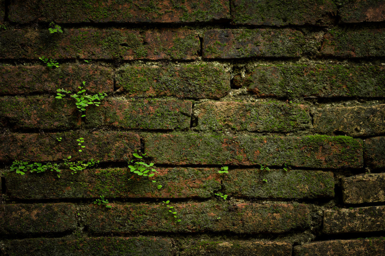 brick wall, wall - building feature, backgrounds, full frame, built structure, textured, architecture, weathered, moss, day, outdoors, pattern, green color, no people, close-up, building exterior