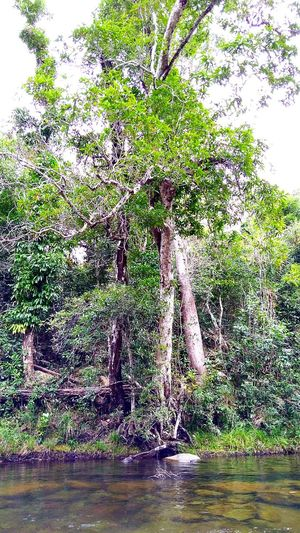 Outdoors, Outside, Open-air, Air, Fresh, Fresh Air, Natural Colours Nature Water Tree No People Beauty In Nature Growth Freshness Sky Rainforest Australia Day